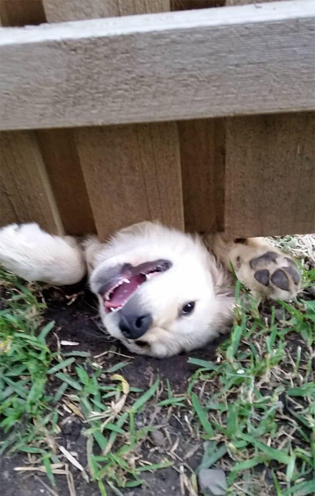 Мой новый сосед Решил представиться