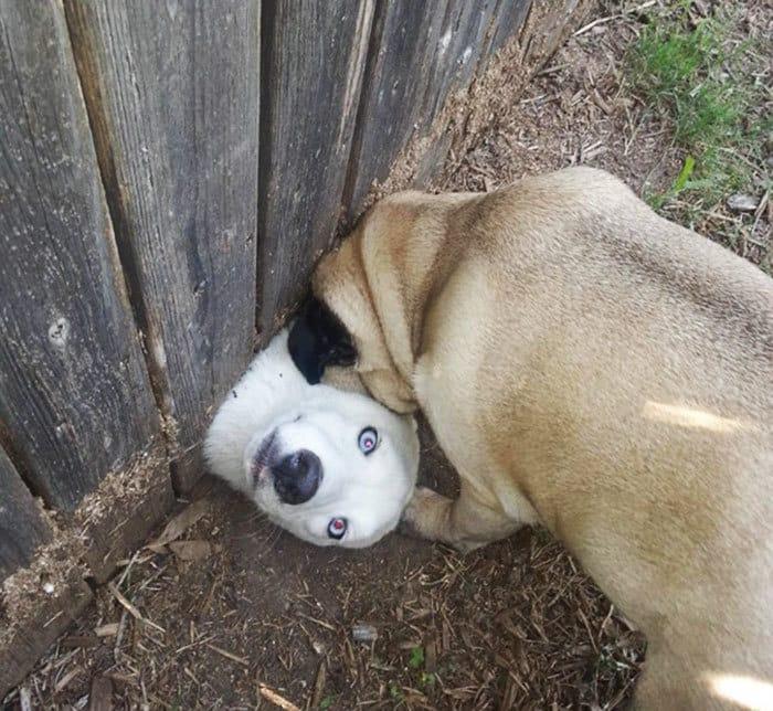 Он хотел сказать привет мне и моя собака