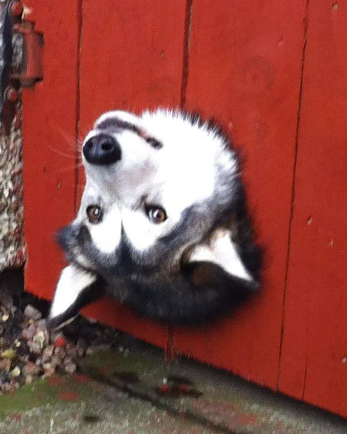 Соседи Собака Есть ли Это довольно часто