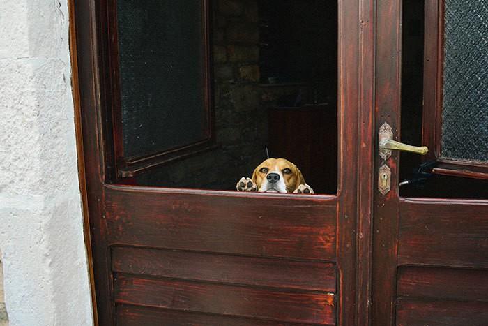 Эта собака была очень решительно Сказать Привет нам на нашей поездке в Хорватию