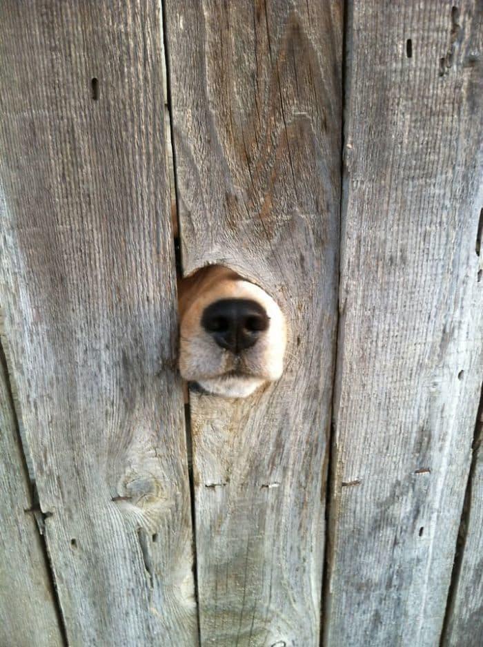 Нос собаки хочет встретиться с тобой