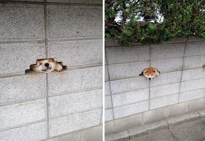 Эта собака Отчаянно хочет сказать Привет