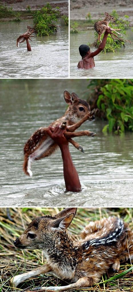 Героический мальчик рискует своей жизнью, чтобы спасти тонущего младенца Deer От Наводнения В Бангладеш