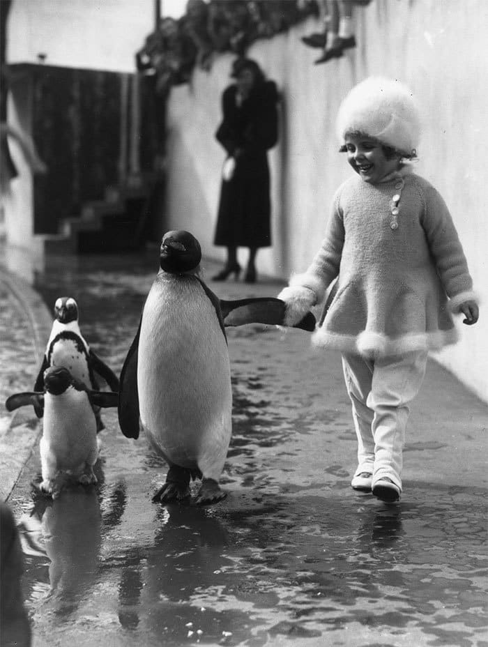 A Little Girl Holds A Penguin