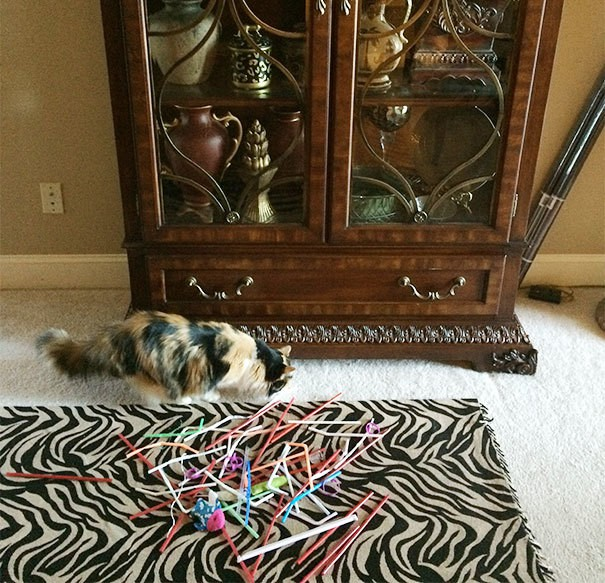 My Cat, Twix, Steals Straws Then Loses Them Under The Curio