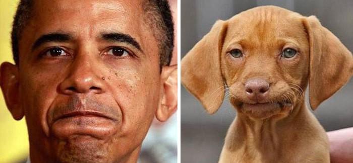 люди похожи на собак (1)