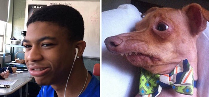 люди похожи на собак 20 (1)