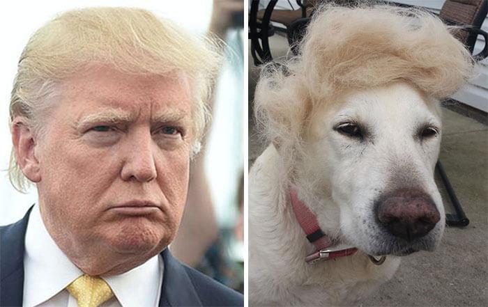 люди похожи на собак 5 (1)