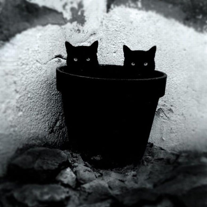 Таинственная Cat