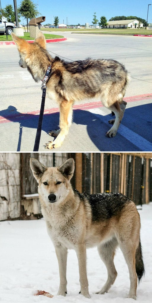 This Is My Dog Miss Midna, 1 Year Apart
