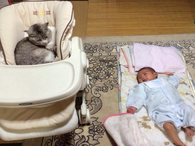赤ちゃん用のイスで眠る猫