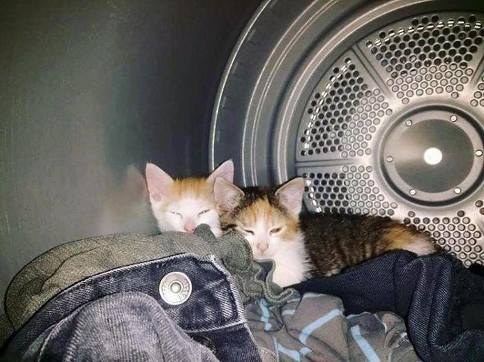 乾燥機の中に猫