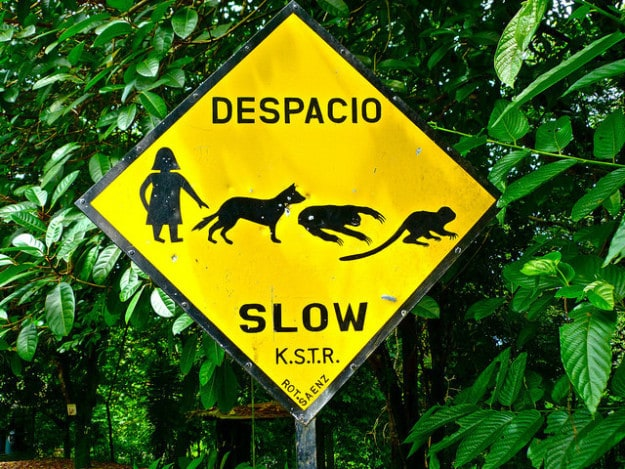 Sloths and Monkeys in Manuel Antonio, Costa Rica