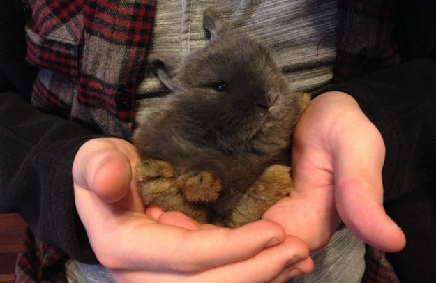 """Oh, little bun-bun. If someone said """"private email server"""" to you, you wouldn"""