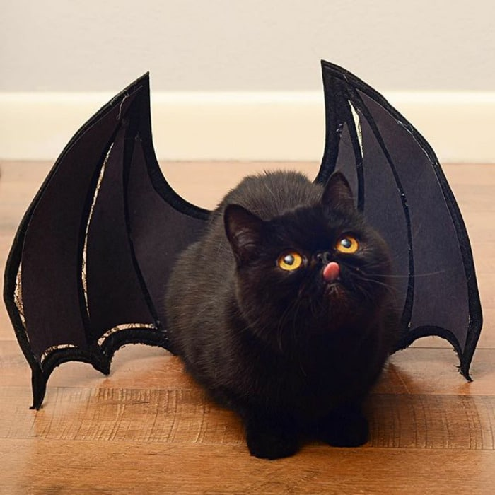 Everyone Always Says That Willow Looks Like Toothless The Dragon