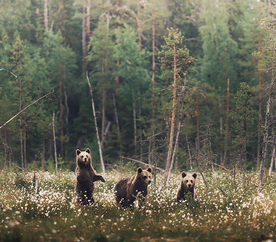 дикого животного-Photography-Konsta-punkka-15