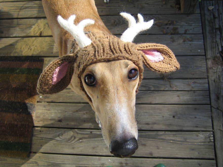 Как связать шапку с рогами для собаки