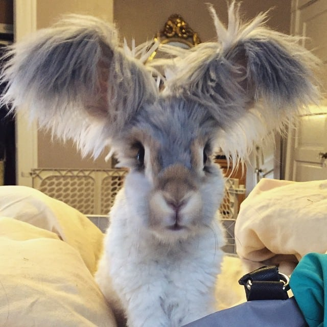 haircut-rabbit-angora-wally-13