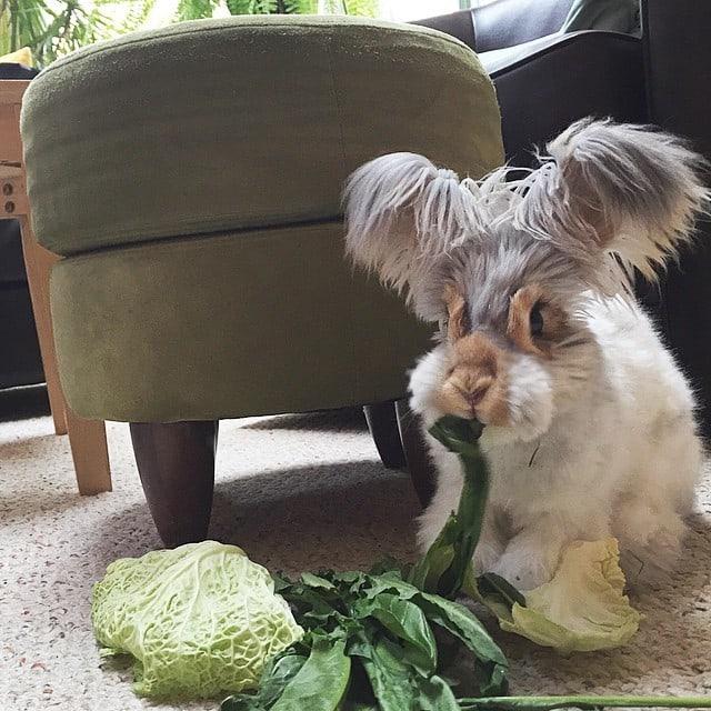 haircut-rabbit-angora-wally-23