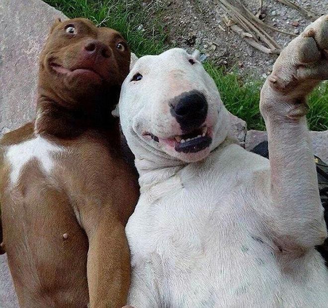 dog-selfie13