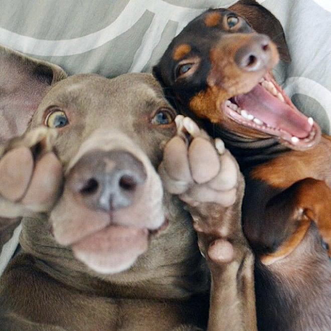 dog-selfie14
