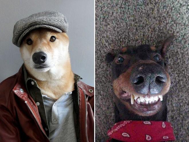 dog-selfie15