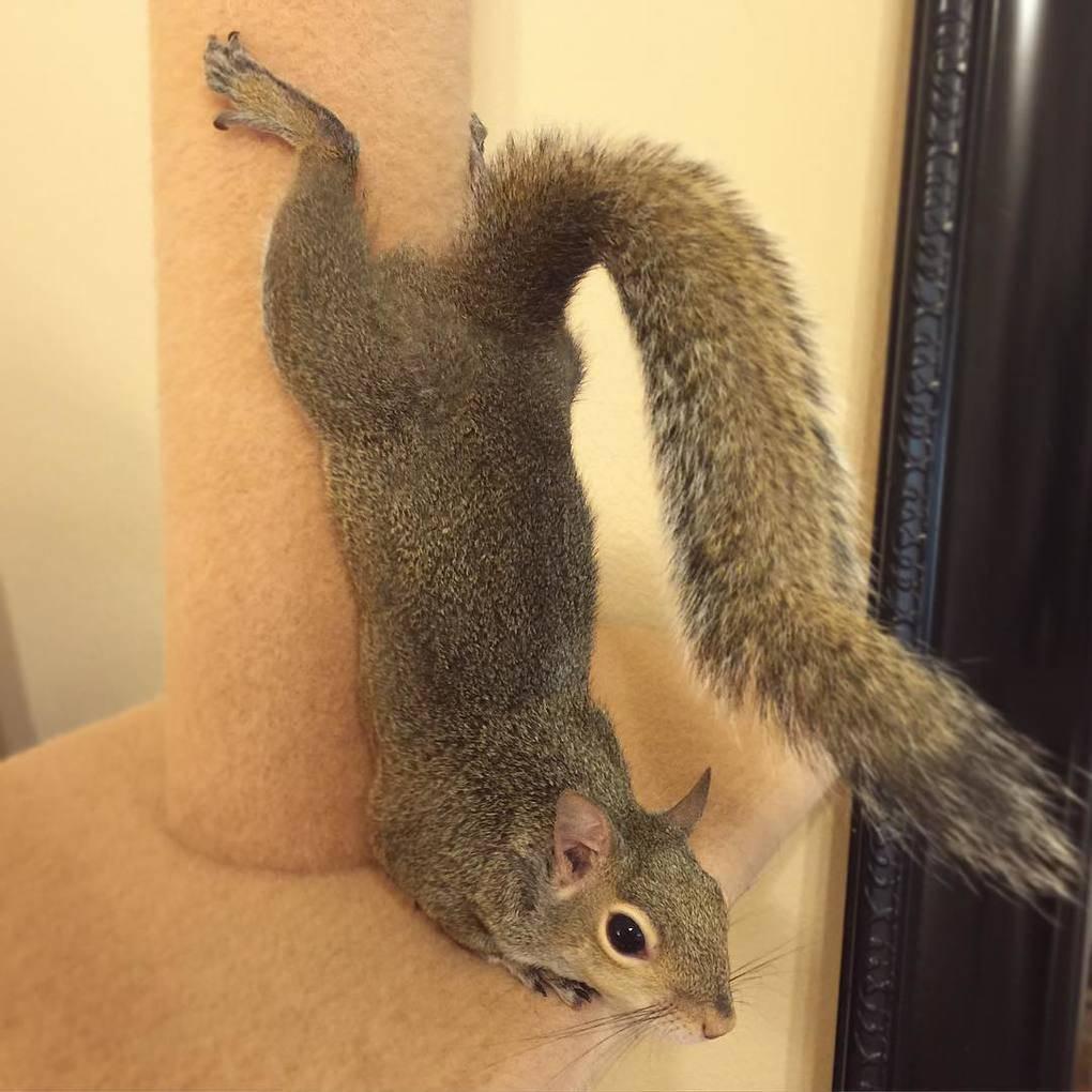 photogenic-rescue-squirrel-jill-31