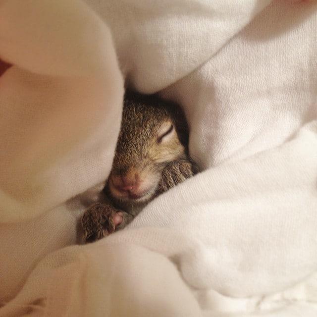 photogenic-rescue-squirrel-jill-5