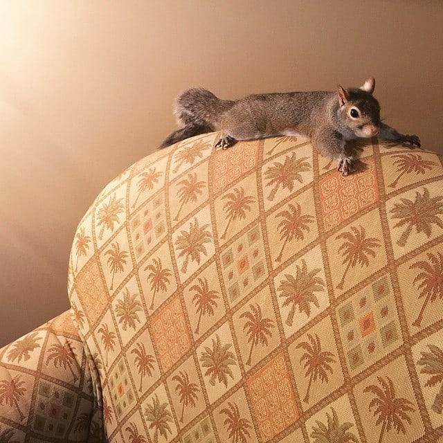 photogenic-rescue-squirrel-jill-75