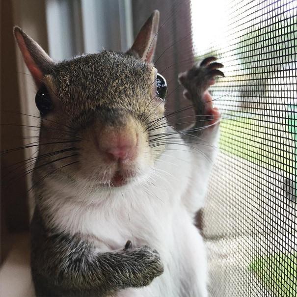 photogenic-rescue-squirrel-jill-83