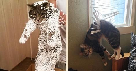 funny-cat-fails-5__605