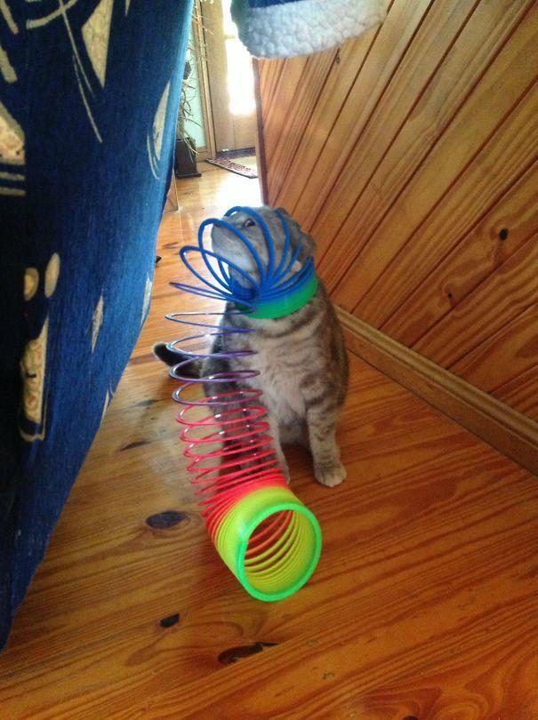 My Rainbow Cat Is Less Glamorous
