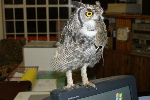 owl saved cat friends 19 Owl gets saved and spends everyday repaying its rescuer (21 Photos)
