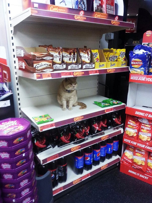 кот в супермаркете Лондона