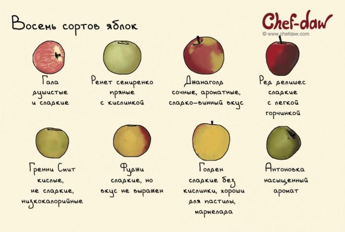 Восемь сортов яблок и их особенности.