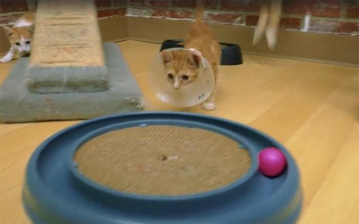 shelter-cats-work-job-farm-livin-9