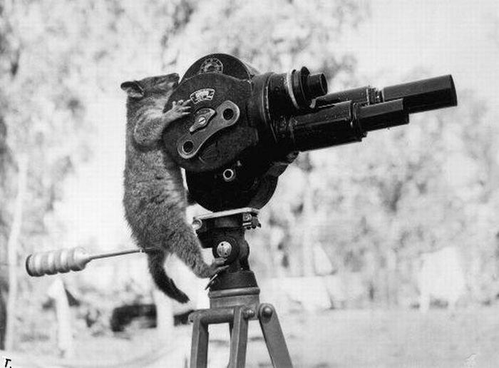 animal_photographers_01