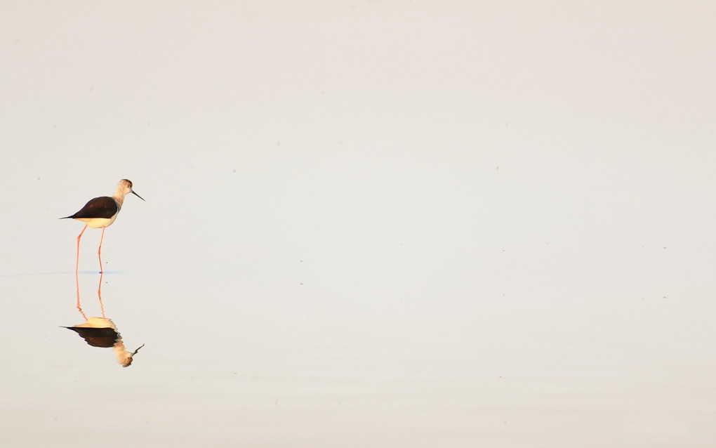 ptica-voda-minimalizm-priroda