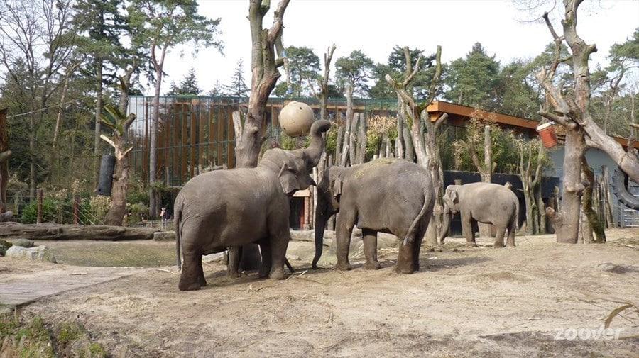 Зоопарк-Амерсфоорт