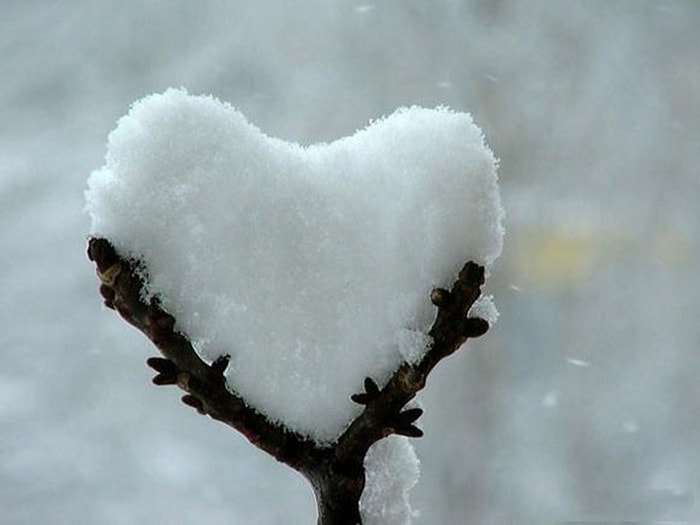 126513858_nature_images_with_love9