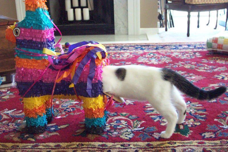curiouscats03