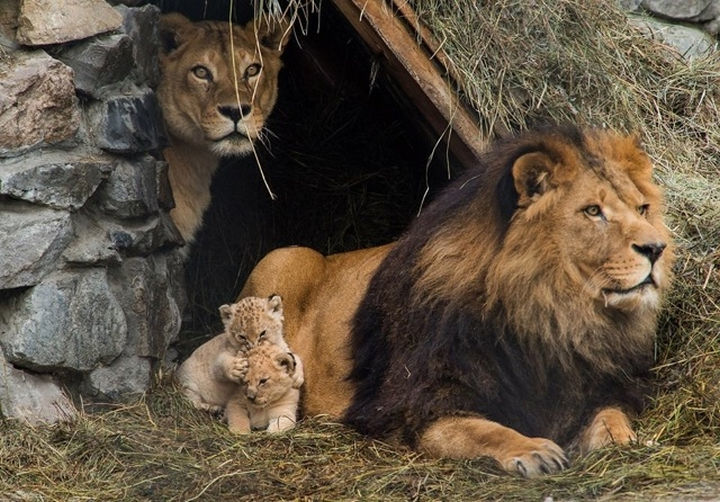 the-animal-kingdom-understands-the-importance-of-family-06