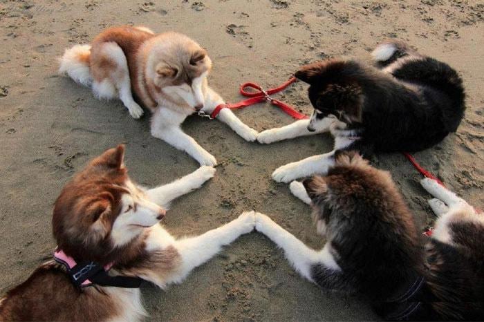 funny-husky-dog-posts-54-583438c666a52__700