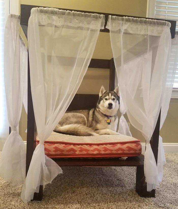 funny-husky-dog-posts-70-5834493dab1d2__700