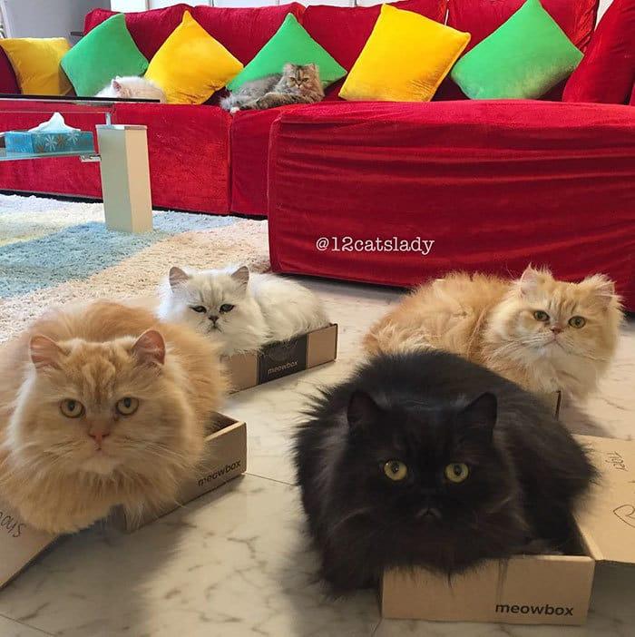 12-cats-lady-japan-20