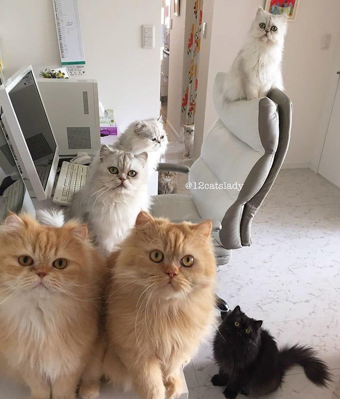 12-cats-lady-japan-33