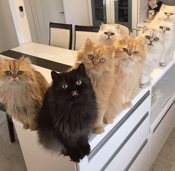 12-cats-lady-japan-6