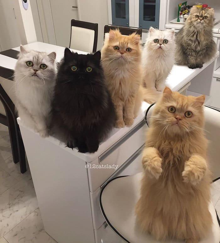 12-cats-lady-japan-7