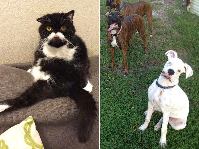 10. Entre los 3 perros y el gato no hay uno que salga bien. Genios