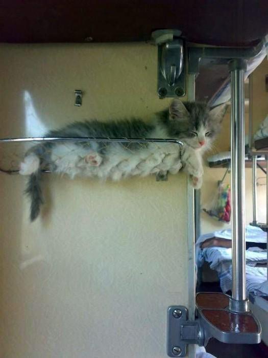 Полка для котенка.